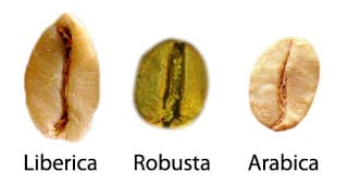 difference in sizes of arabica, robusta and liberica coffee bean
