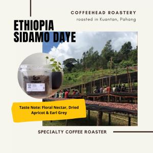 filter & light roasted single origin coffee